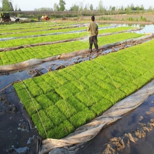 بنر شرکت سبز پویان شیراز