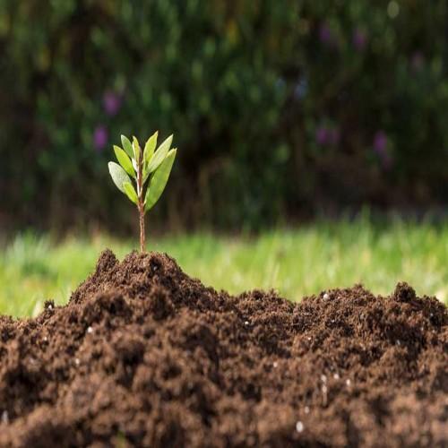 تصویر شرکت دیهیم زراعت گستر