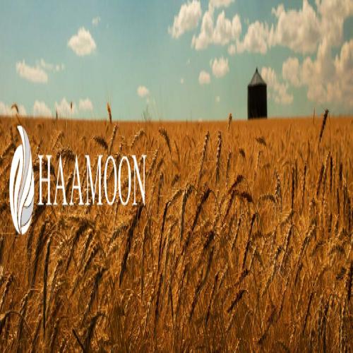 طراحی شرکت کشاورزی هامون