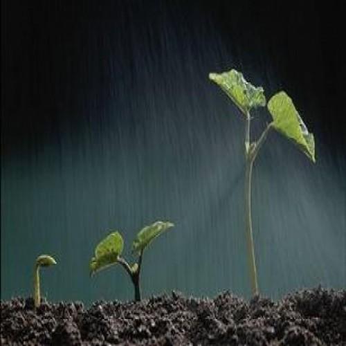 سازمان نظام مهندسی کشاورزی و منابع طبیعی استان قم