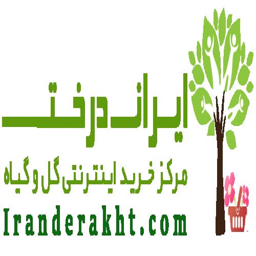 فروشگاه اینترنتی ایران درخت