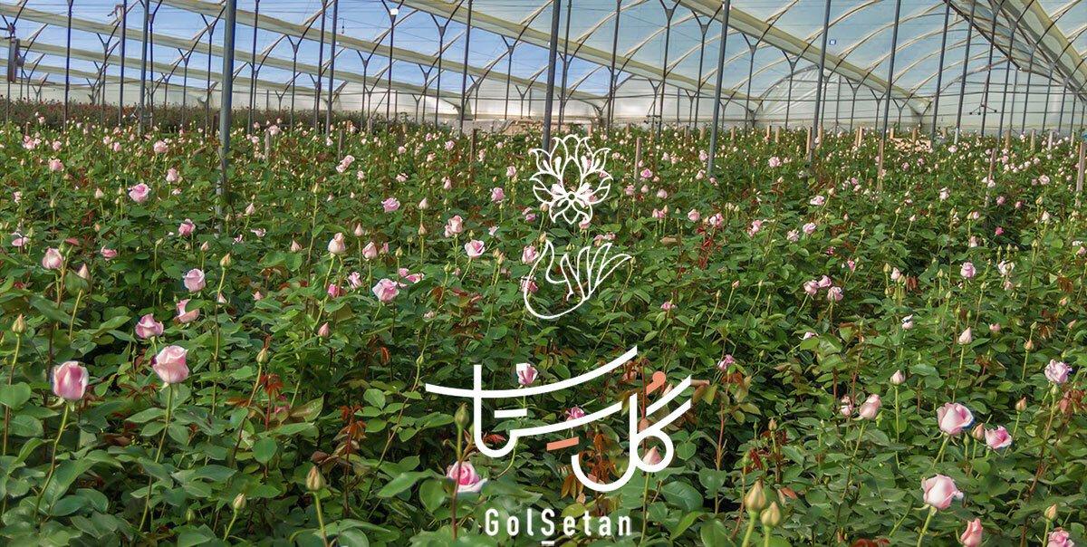 گل فروشی آنلاین گُل سِتان